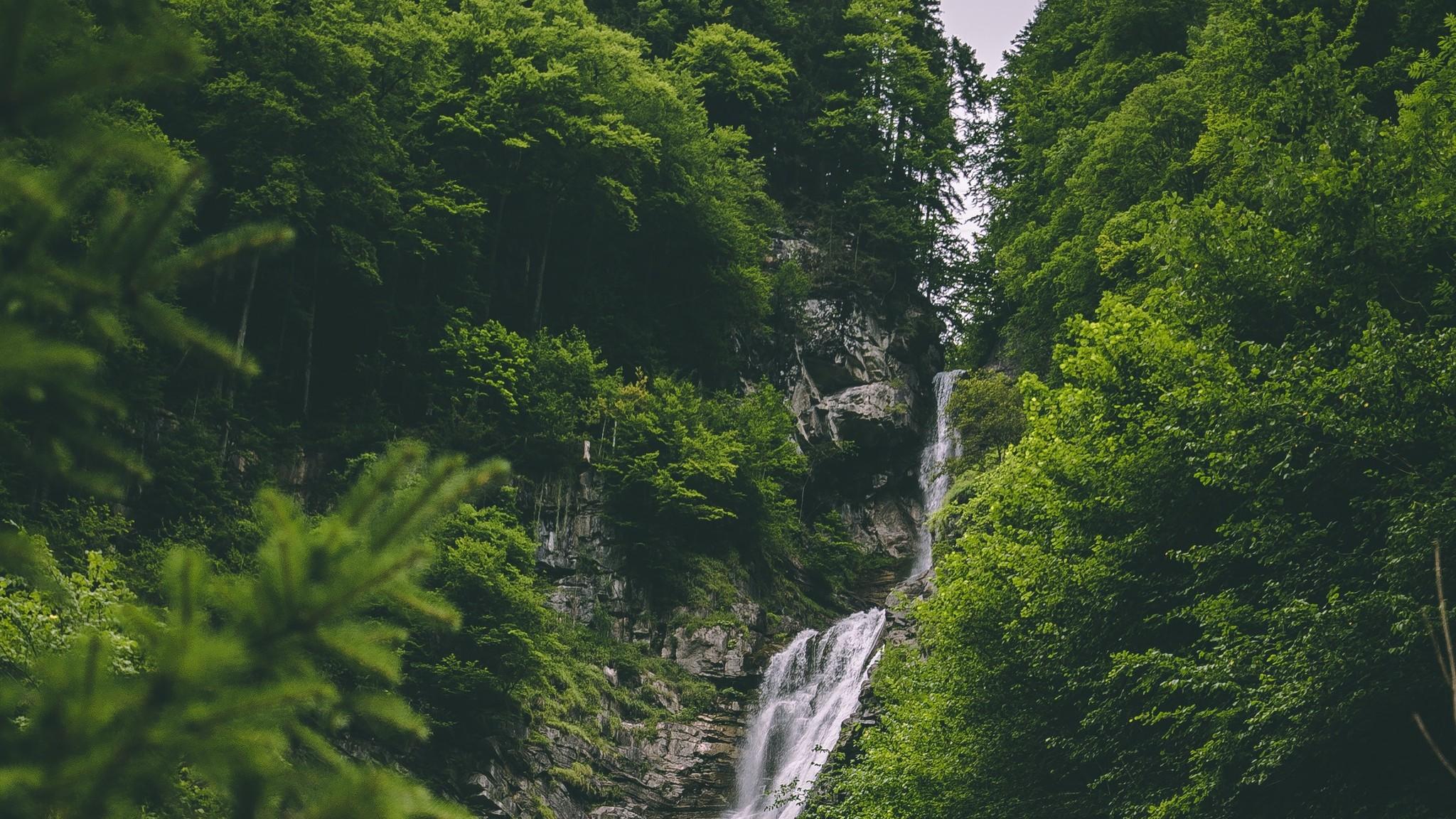 The Forest Fond Décran Hd Arrière Plan 2048x1152 Id