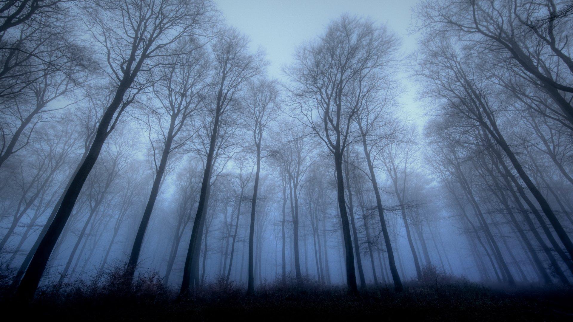 Bosque Fondo De Pantalla HD