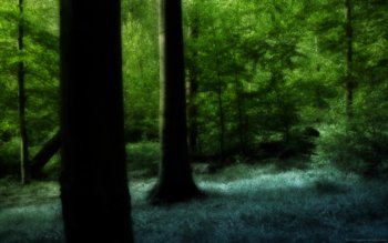 Earth - Forest Wallpapers and Backgrounds ID : 10123