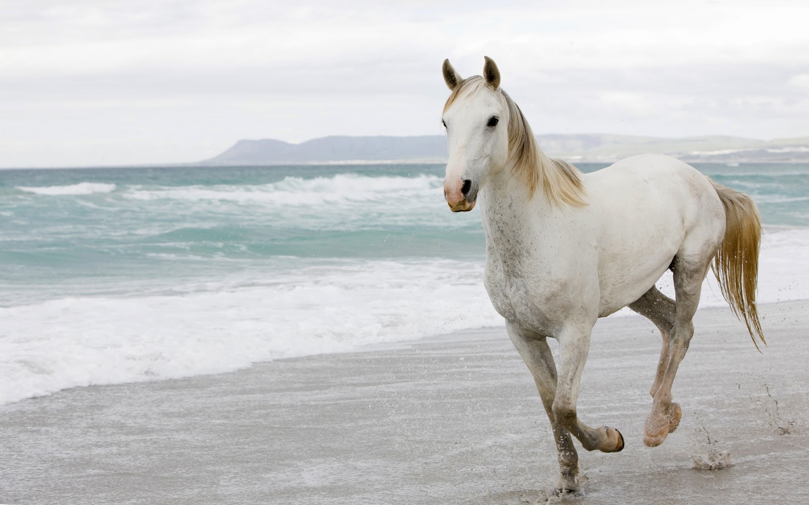 Horse Wallpaper and Background Image | 1600x1000 | ID ...