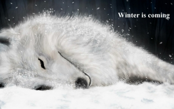 Animal - Wolf Wallpapers and Backgrounds ID : 102363
