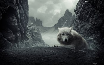 Animal - Wolf Wallpapers and Backgrounds ID : 102853