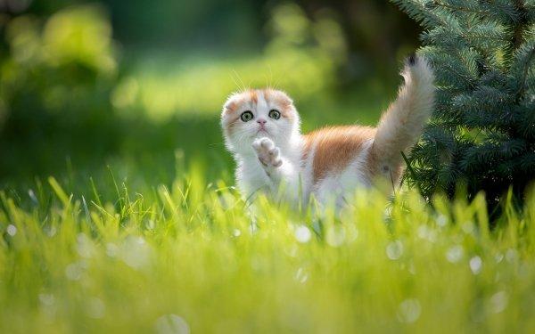 Animal Cat Cats Pet Grass HD Wallpaper | Background Image