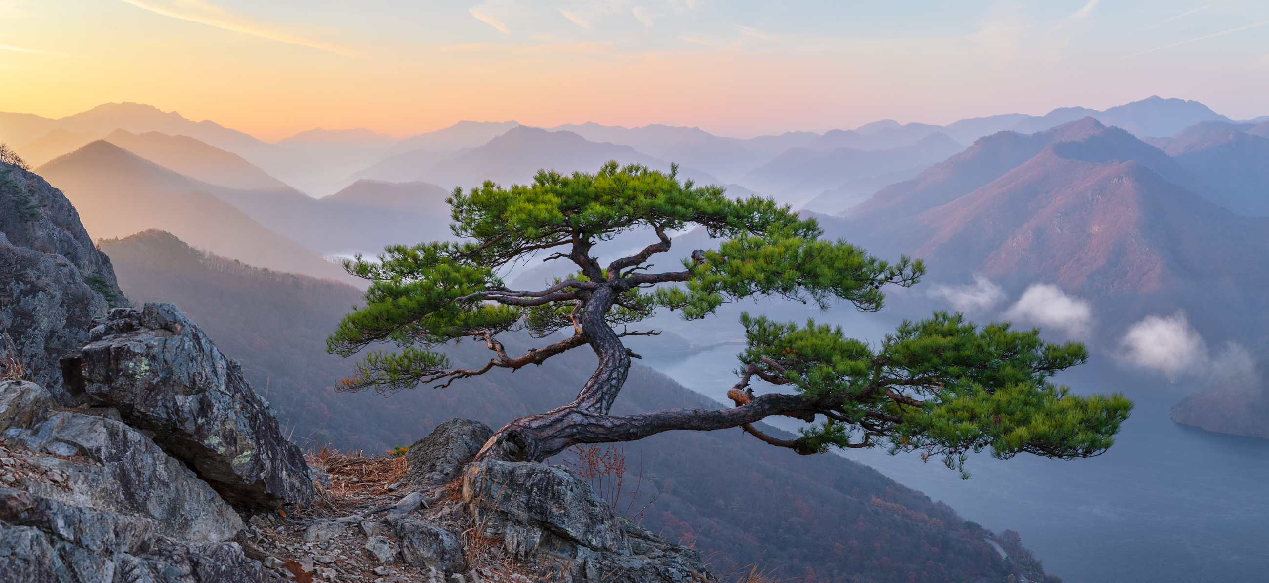 Trees Growing Out Of Edge Of Rock Hd Wallpaper Background Image