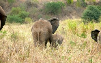 Dierenrijk - Olifant Wallpapers and Backgrounds ID : 104203
