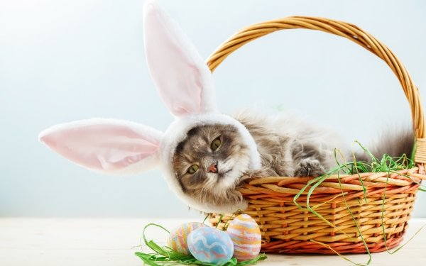 Animal Cat Cats Pet Basket Easter HD Wallpaper | Background Image