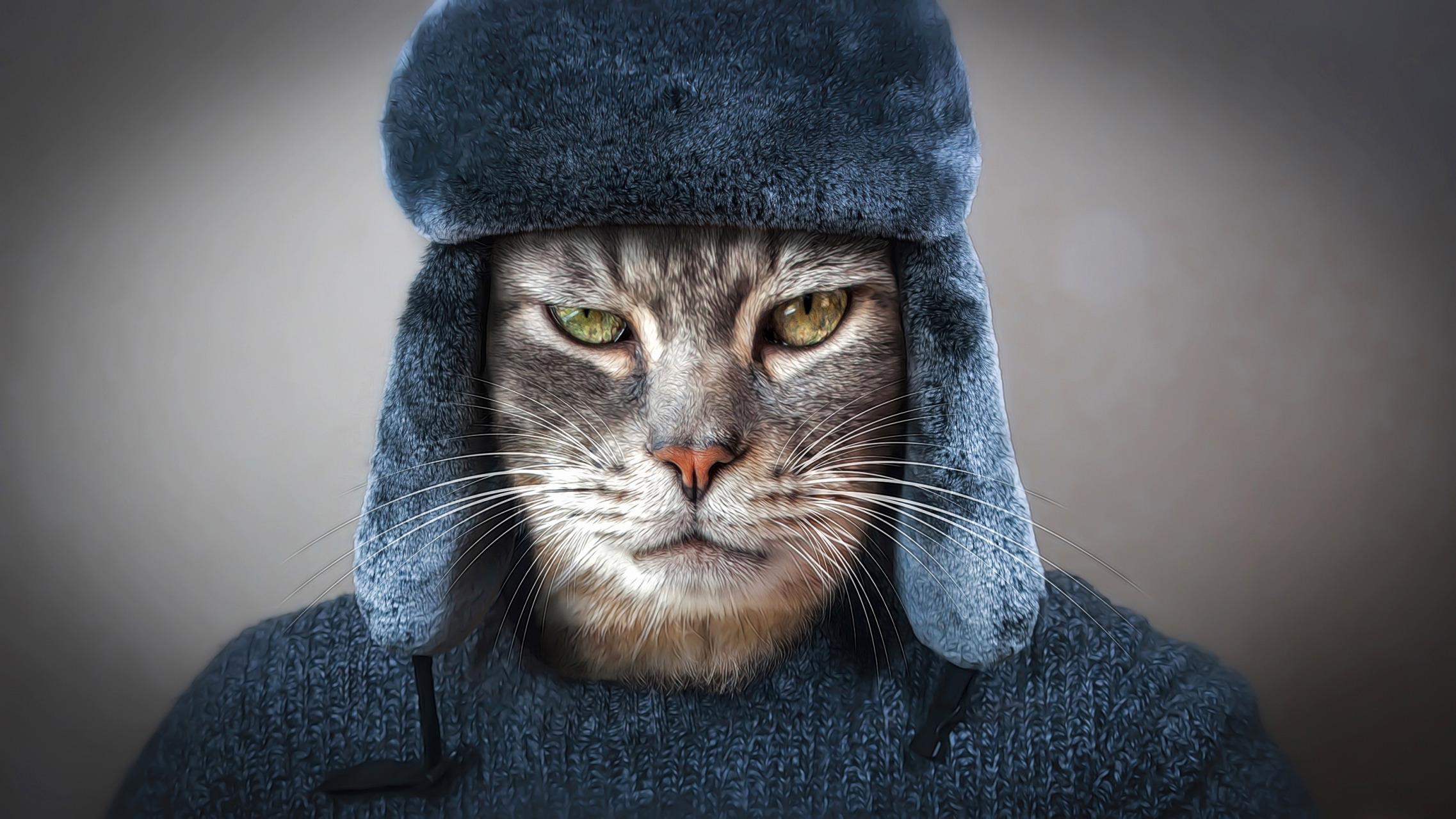 Cat With Man S Hat And Sweater On Hd Wallpaper Background Image