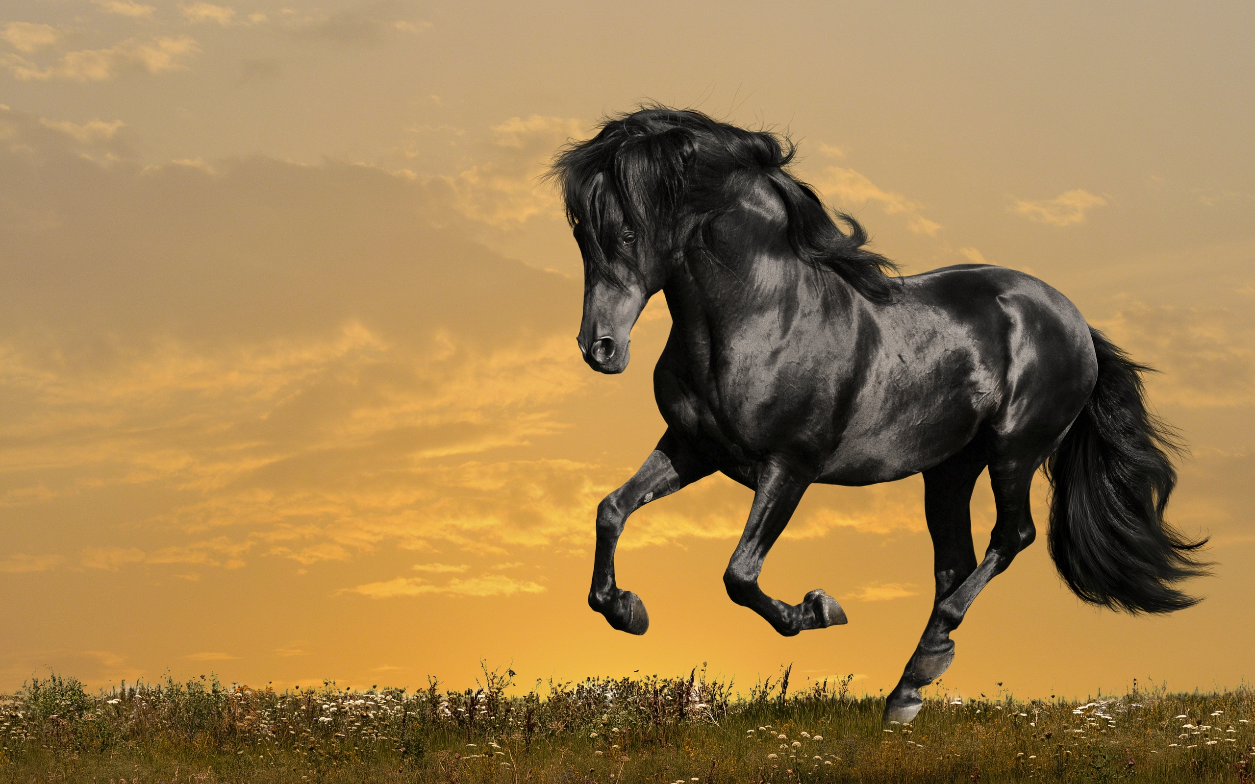 1315 Horse HD Wallpapers