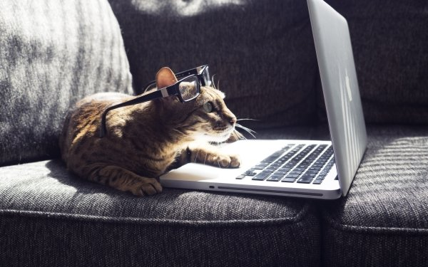 Animal Cat Cats Glasses Laptop Pet HD Wallpaper | Background Image