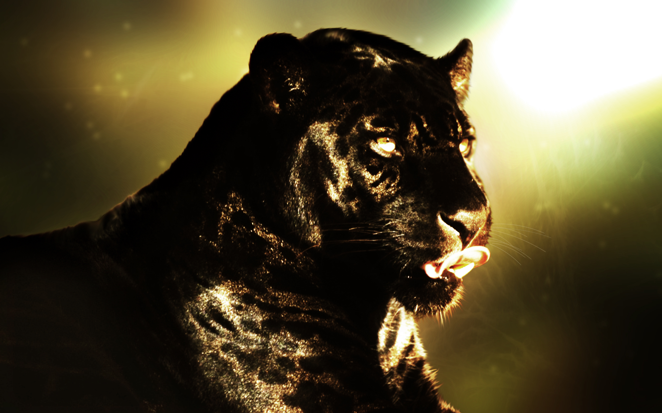 99 Black Panther HD Wallpapers