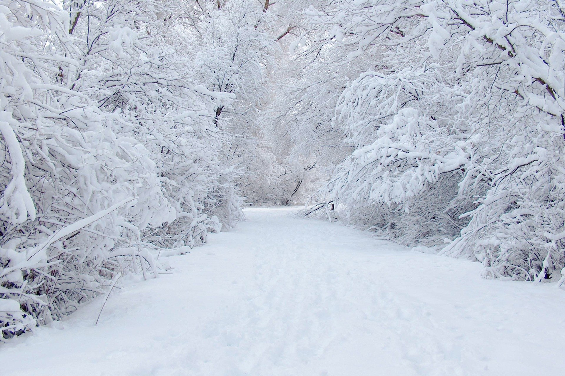Earth - Winter  Scenic Earth Snow Tree Path Road White Wallpaper