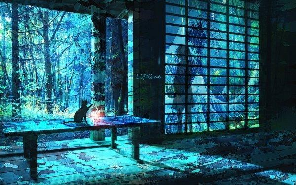 Anime Original Cat Lantern HD Wallpaper | Background Image
