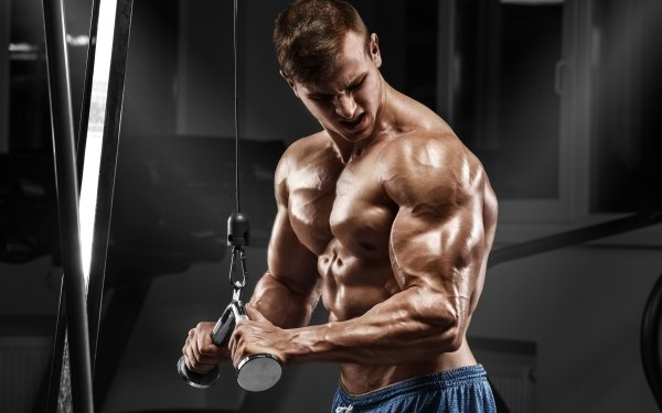 Sports Bodybuilding Fitness Muscle HD Wallpaper | Background Image
