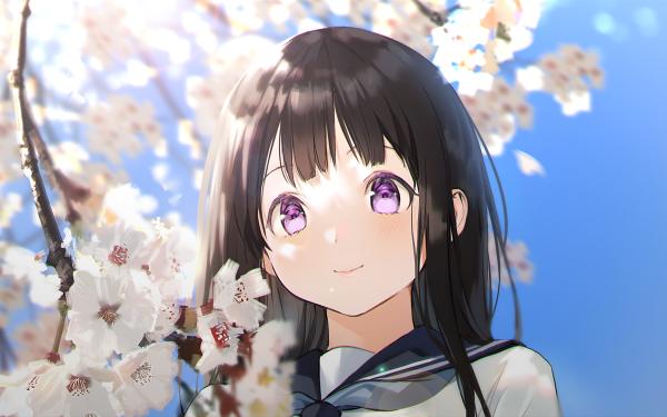 Anime Hyouka Eru Chitanda Purple Eyes Black Hair Cherry Blossom School Uniform HD Wallpaper   Background Image