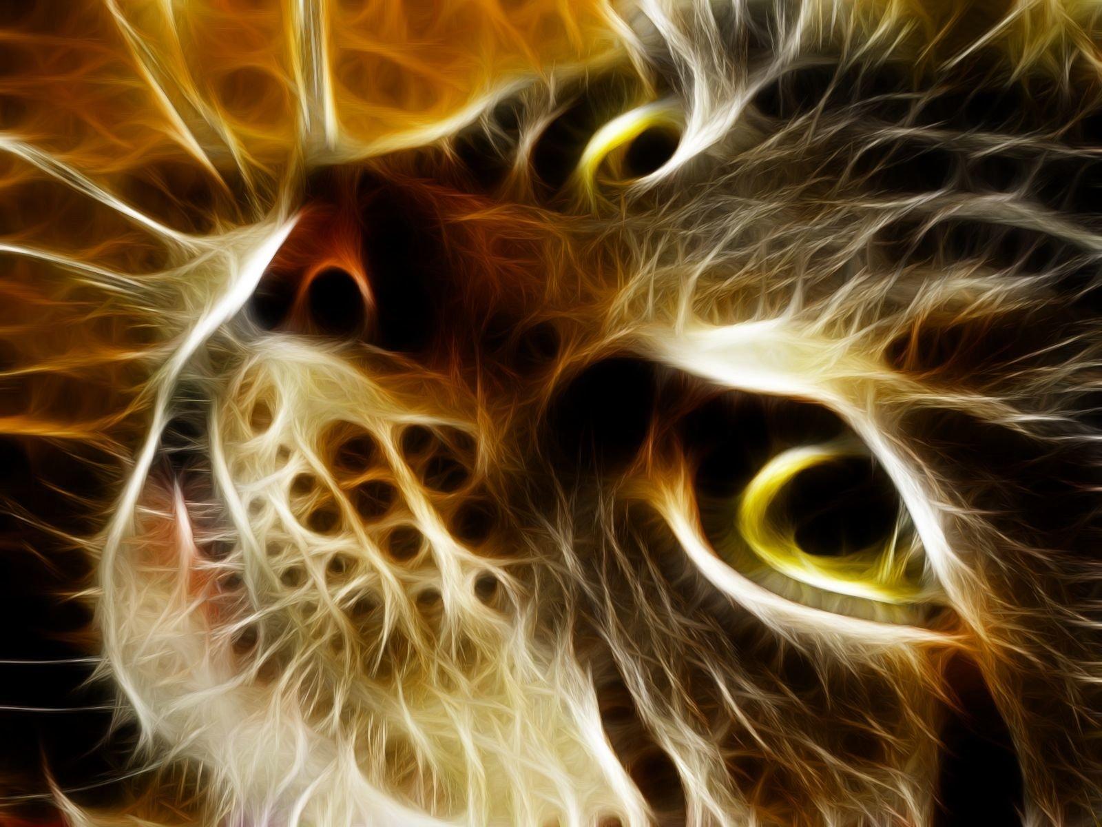 Animal - Cat  Baby Fractal Kitten Wallpaper