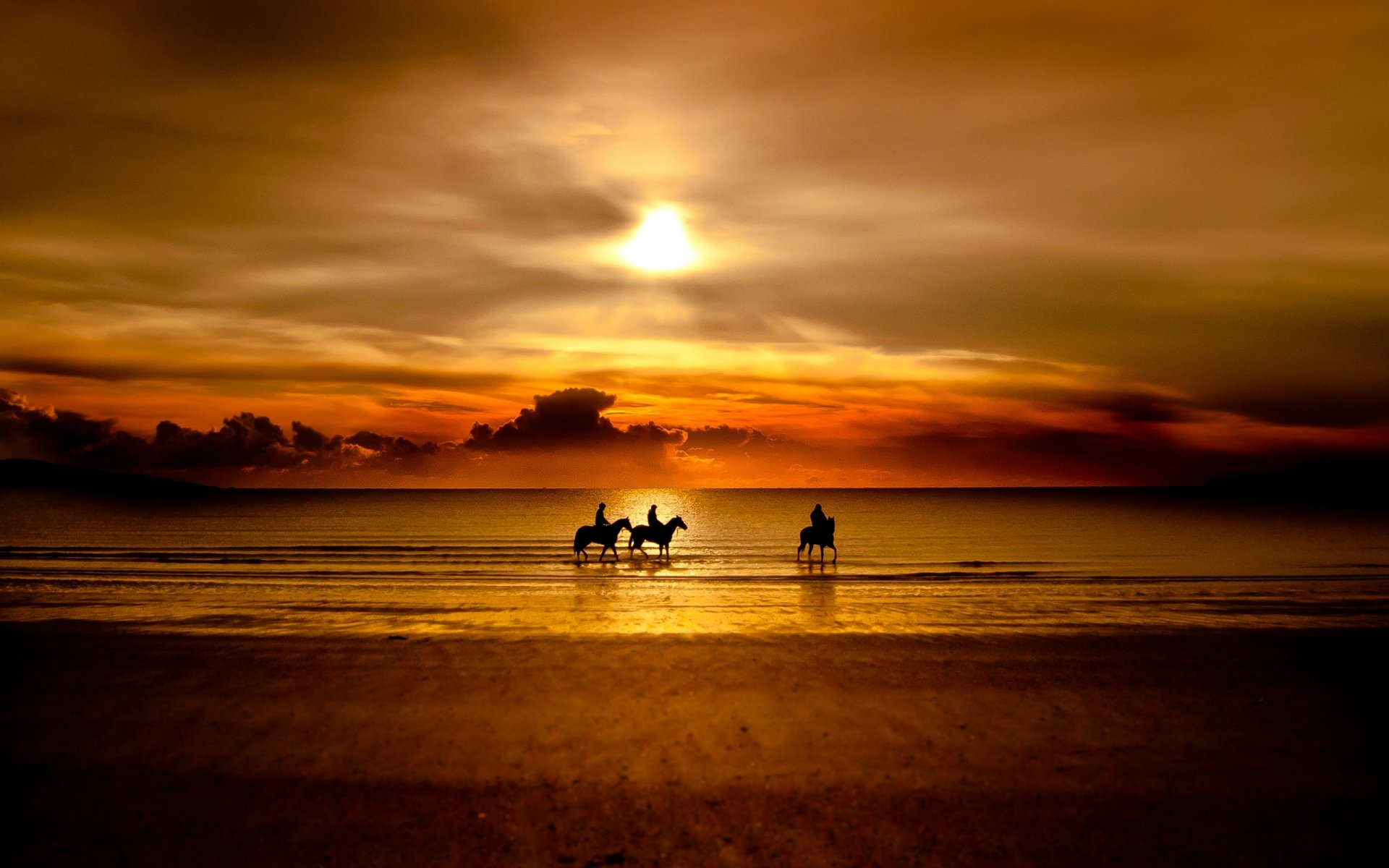 Photography - HDR  Silhouette Horse Wallpaper