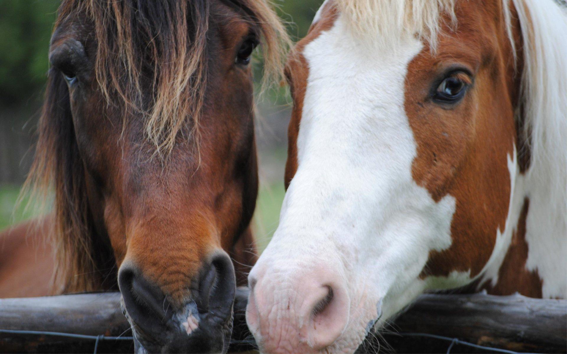 Animal - Horse  Wallpaper