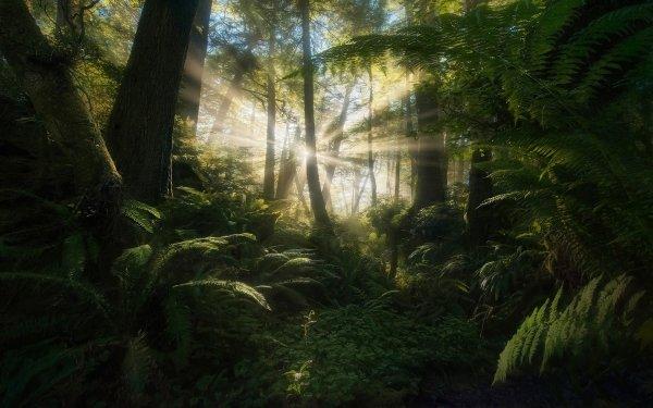 Earth Sunbeam Jungle Tree Vegetation Fern HD Wallpaper | Background Image
