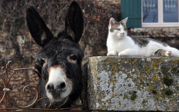 Animal Cute Cat Muzzle Fence Donkey Pet HD Wallpaper   Background Image