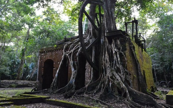 Man Made Ruin Tree Roots Architecture Belize HD Wallpaper | Background Image