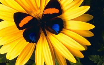 Animal - Butterfly Wallpapers and Backgrounds ID : 113891