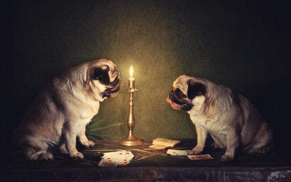 Djur Dog Hundar Kort Pug HD Wallpaper | Background Image