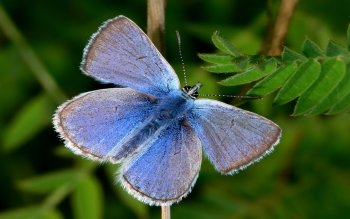 Animal - Butterfly Wallpapers and Backgrounds ID : 114071