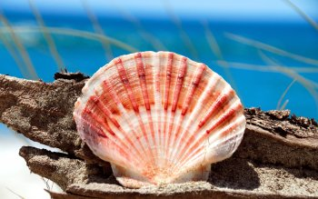 Earth - Shell Wallpapers and Backgrounds ID : 114571