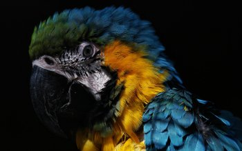 Animal - Macaw Wallpapers and Backgrounds ID : 114751