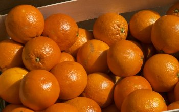 Food - Orange Wallpapers and Backgrounds ID : 115661