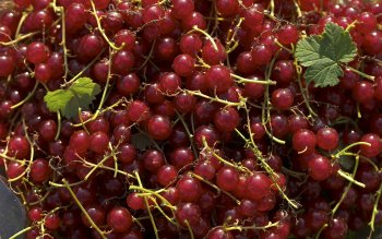 Alimento - Currant Wallpapers and Backgrounds ID : 115663
