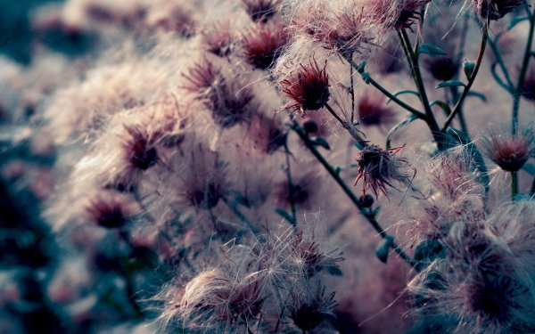 HD Wallpaper | Background Image ID:115113