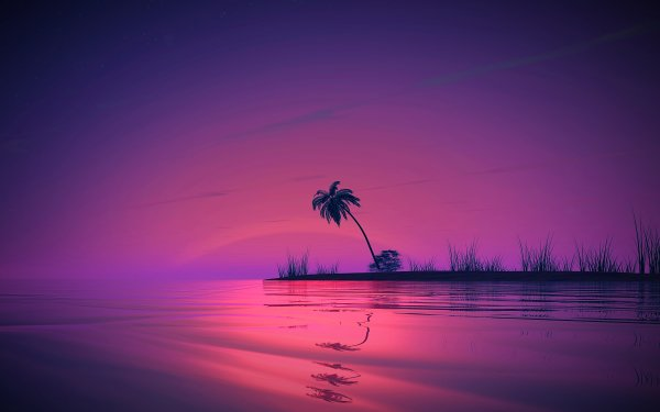 Earth Landscape Water Palm Tree Sunset HD Wallpaper | Background Image