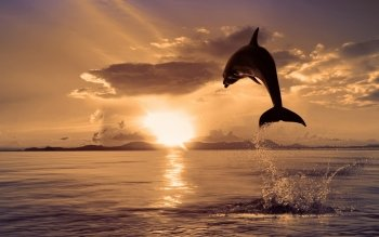 Animalia - Delfin Wallpapers and Backgrounds ID : 117021