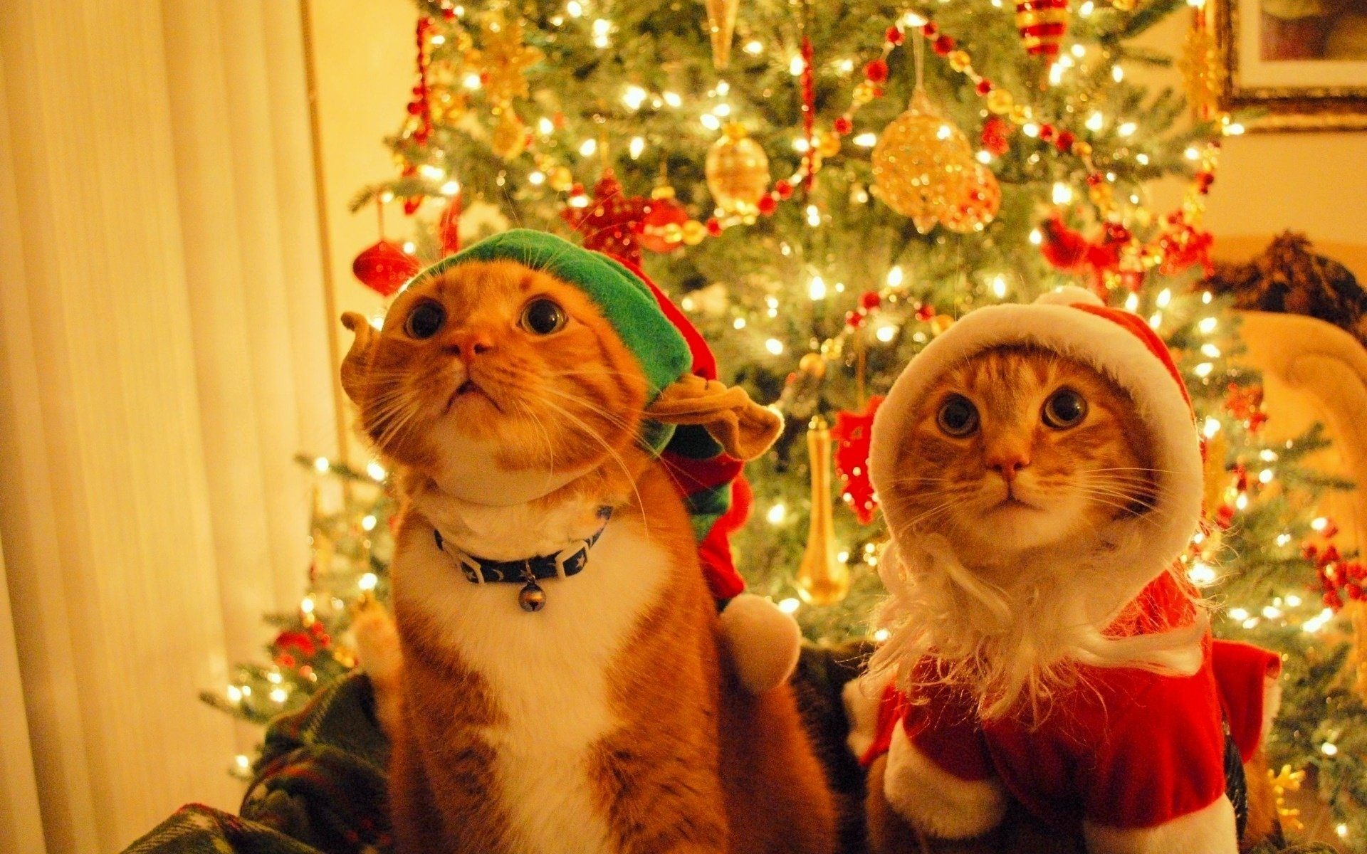 Holiday - Christmas  Christmas Ornaments Santa Hat Cat Humor Christmas Tree Wallpaper