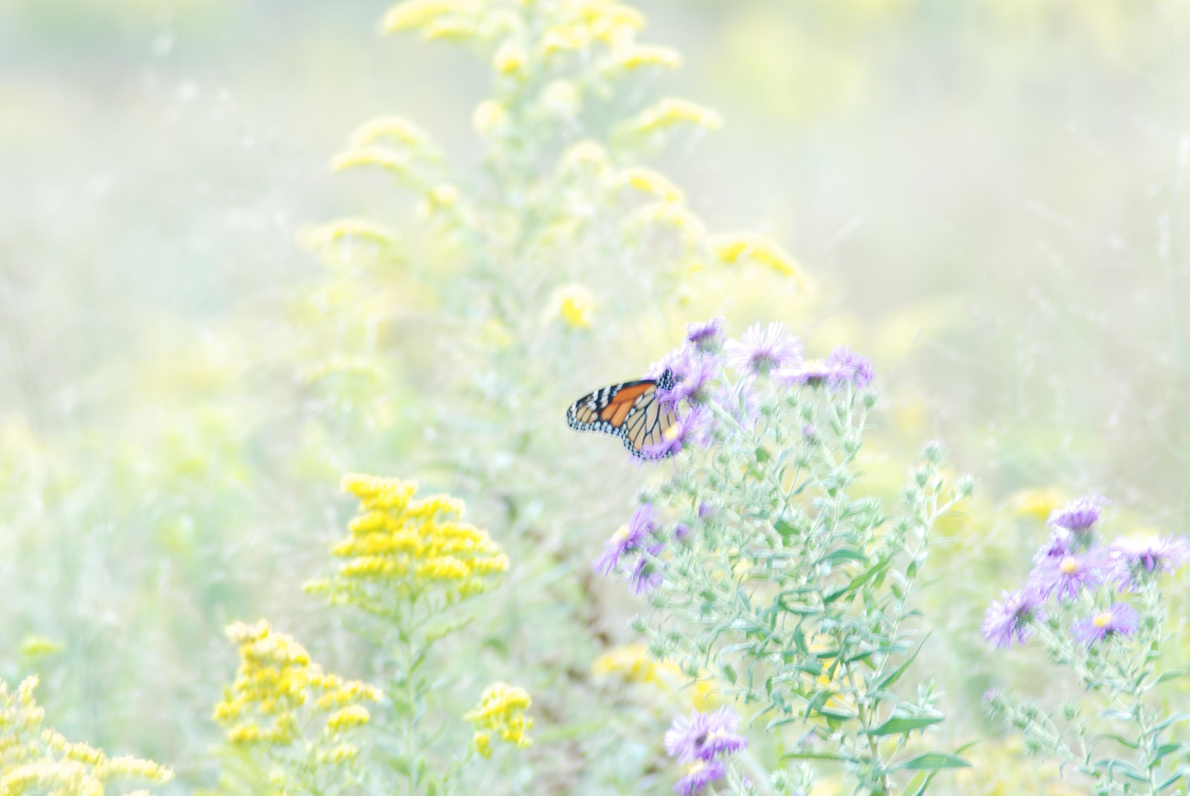 Butterfly Computer Wallpapers Desktop Backgrounds