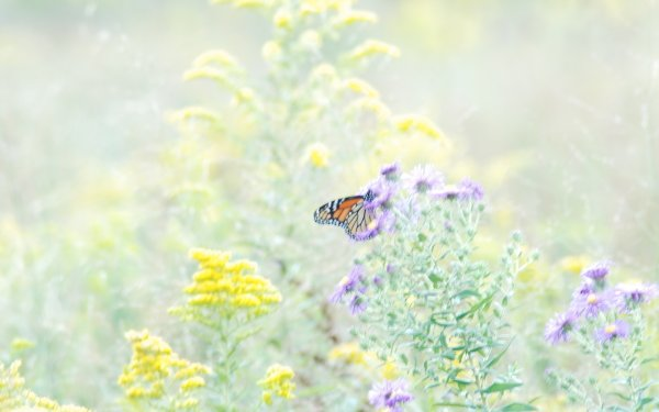 Animal Butterfly Flower HD Wallpaper | Background Image
