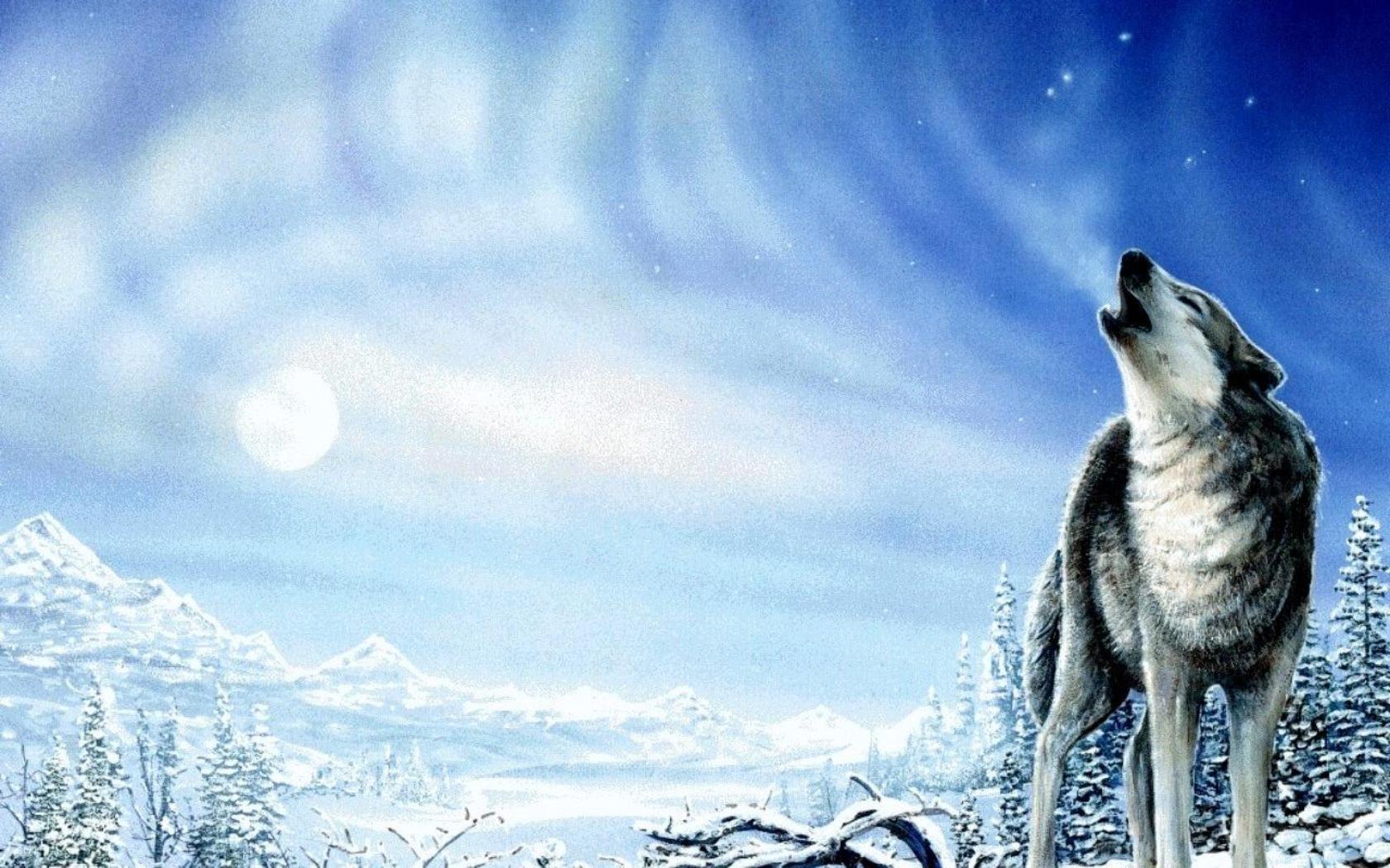 Tiere - Wolf  Hintergrundbild