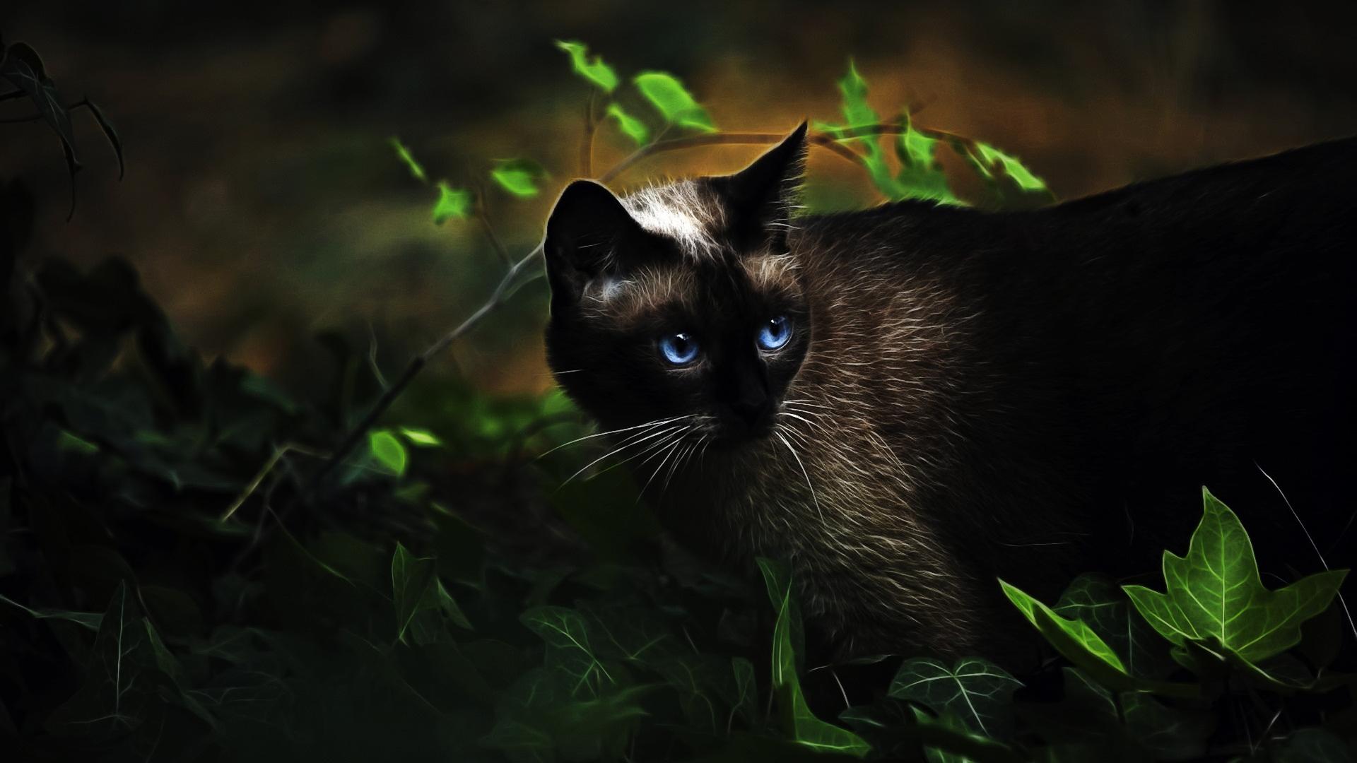crazy cat gifs