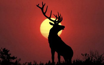 Animal - Deer Wallpapers and Backgrounds ID : 129111