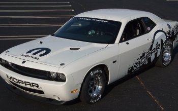 Fordon - Dodge Challenger Wallpapers and Backgrounds ID : 143733