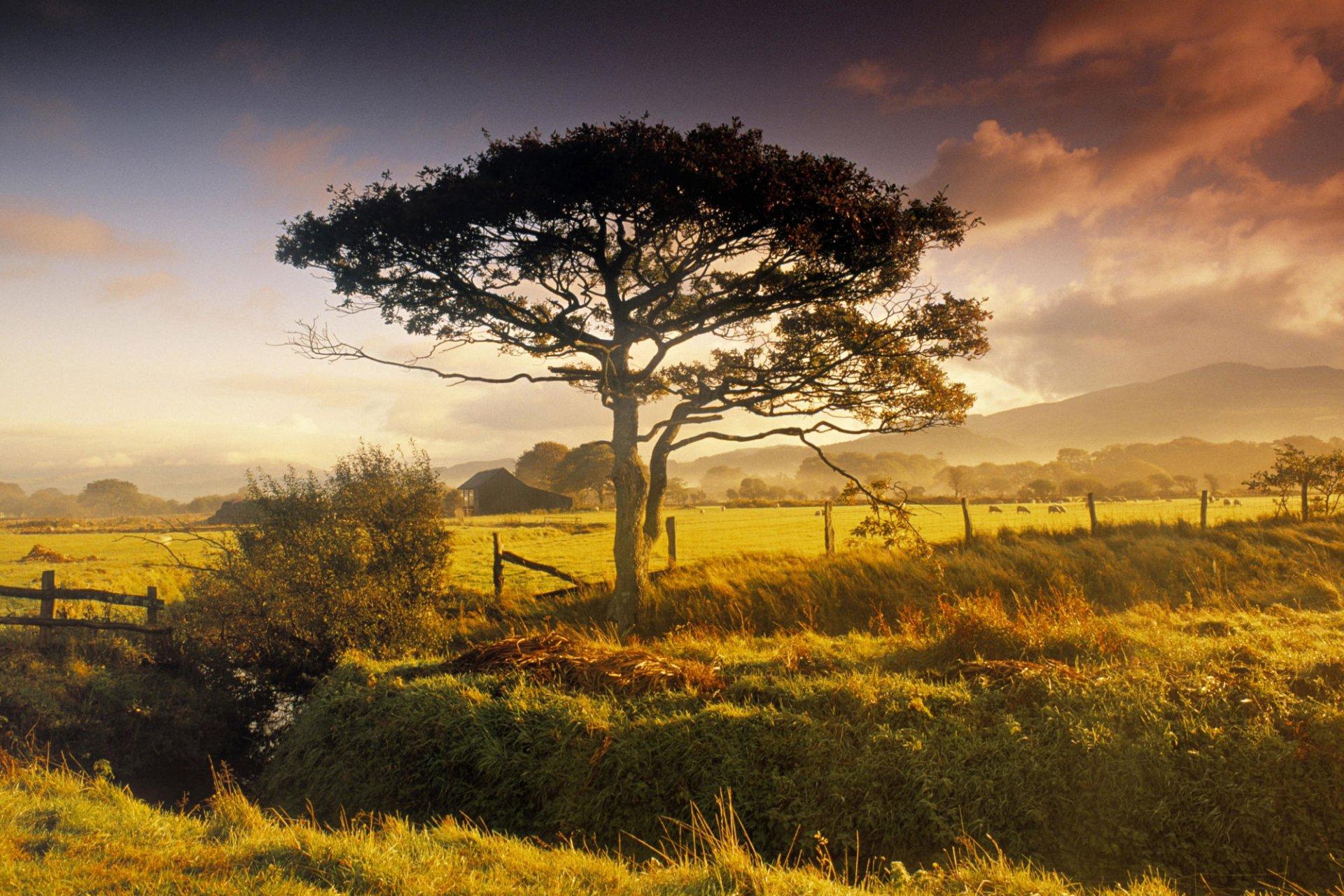 Earth - Tree  New Zealand Wallpaper