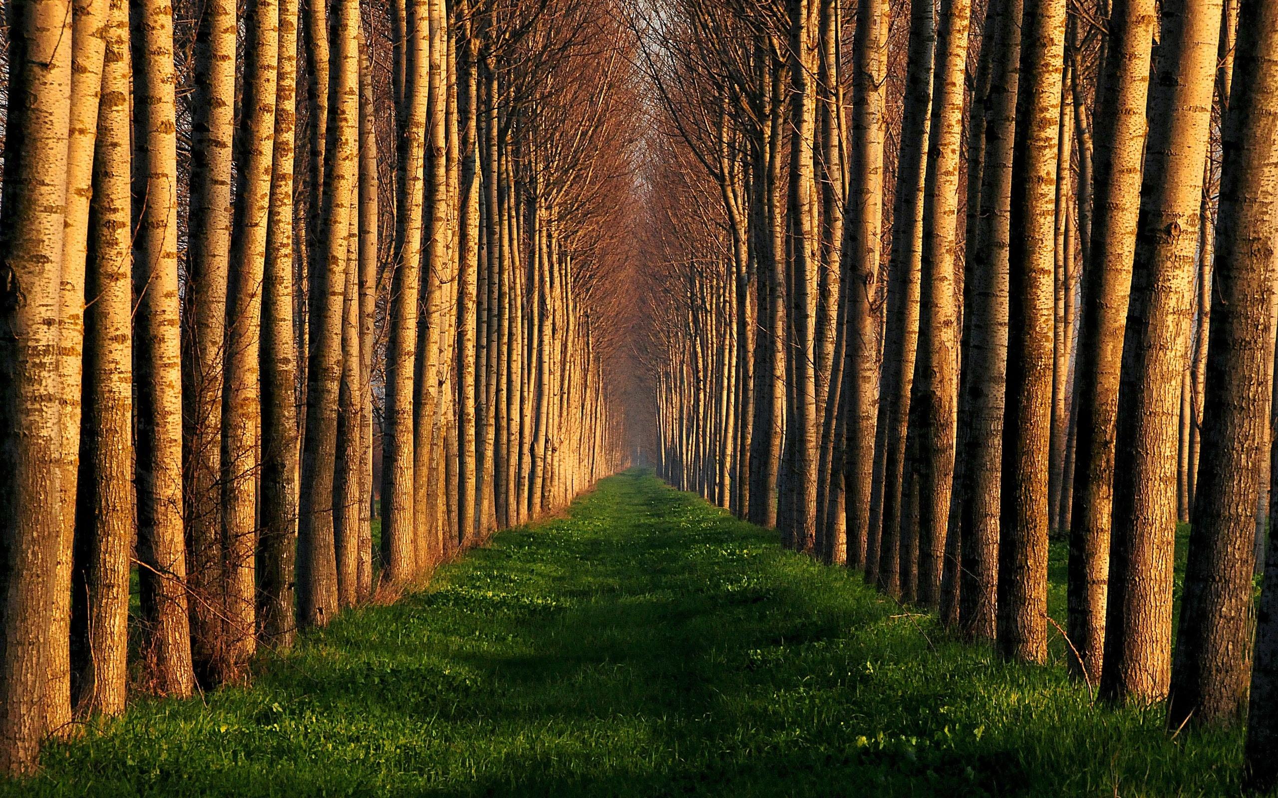 большое дерево загрузить