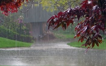 Photography - Rain Wallpapers and Backgrounds ID : 159471