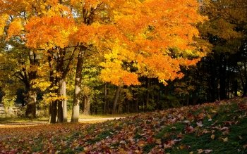 Earth - Autumn Wallpapers and Backgrounds ID : 165223