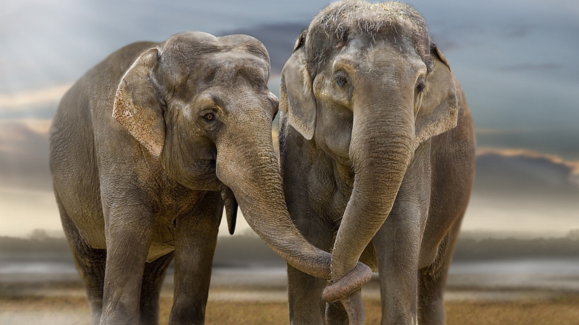 Elephant Full HD Wallpaper and Background 1920x1080 ID169013