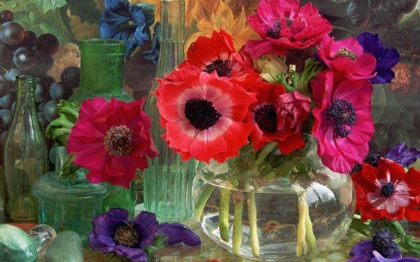 Photography Still Life Flower Anemone Vase Red Flower Purple Flower HD Wallpaper   Background Image