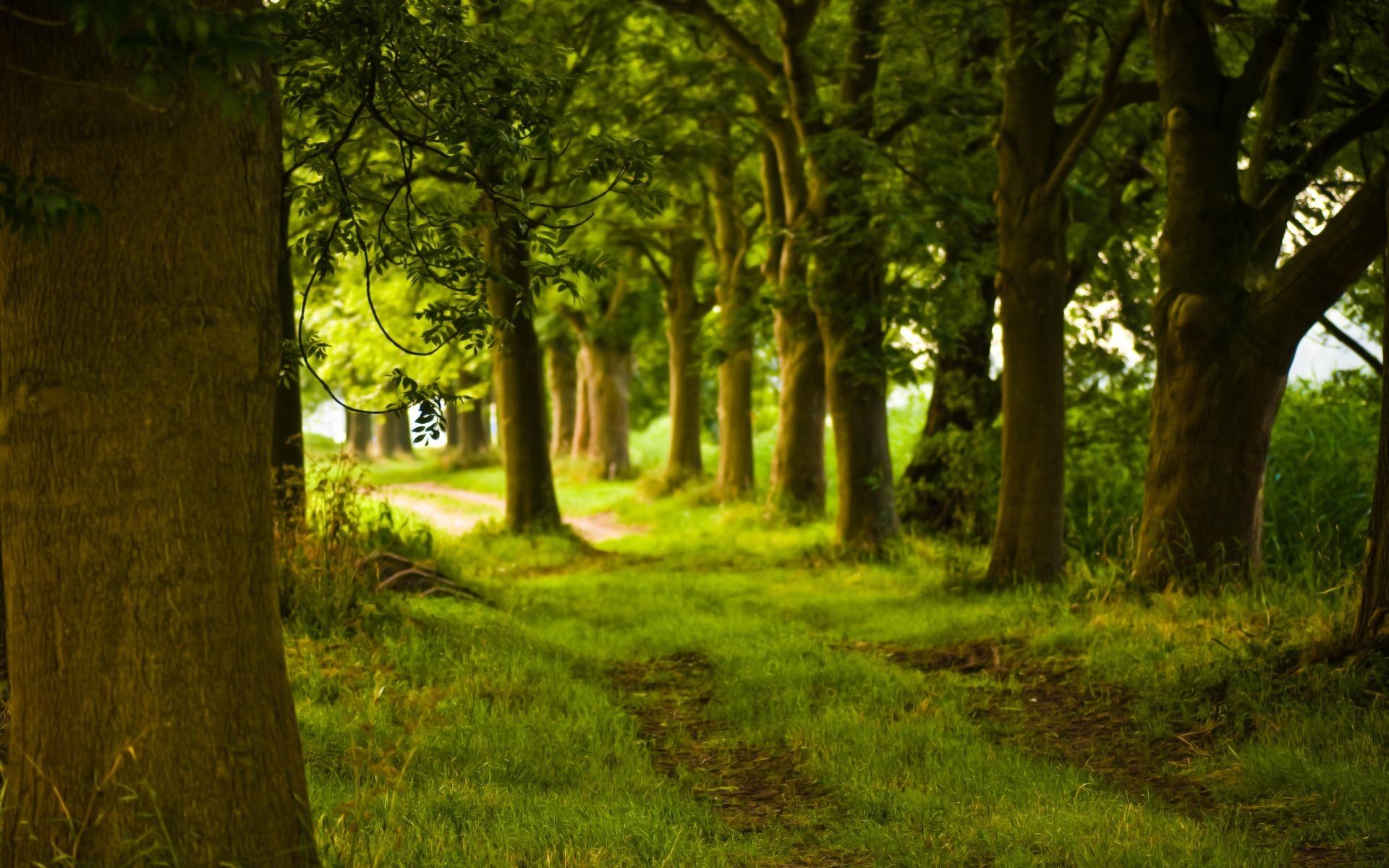 Tree HD Wallpaper