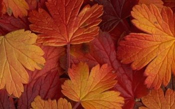 Earth - Leaf Wallpapers and Backgrounds ID : 179173
