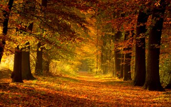 Earth - Autumn Wallpapers and Backgrounds ID : 179303